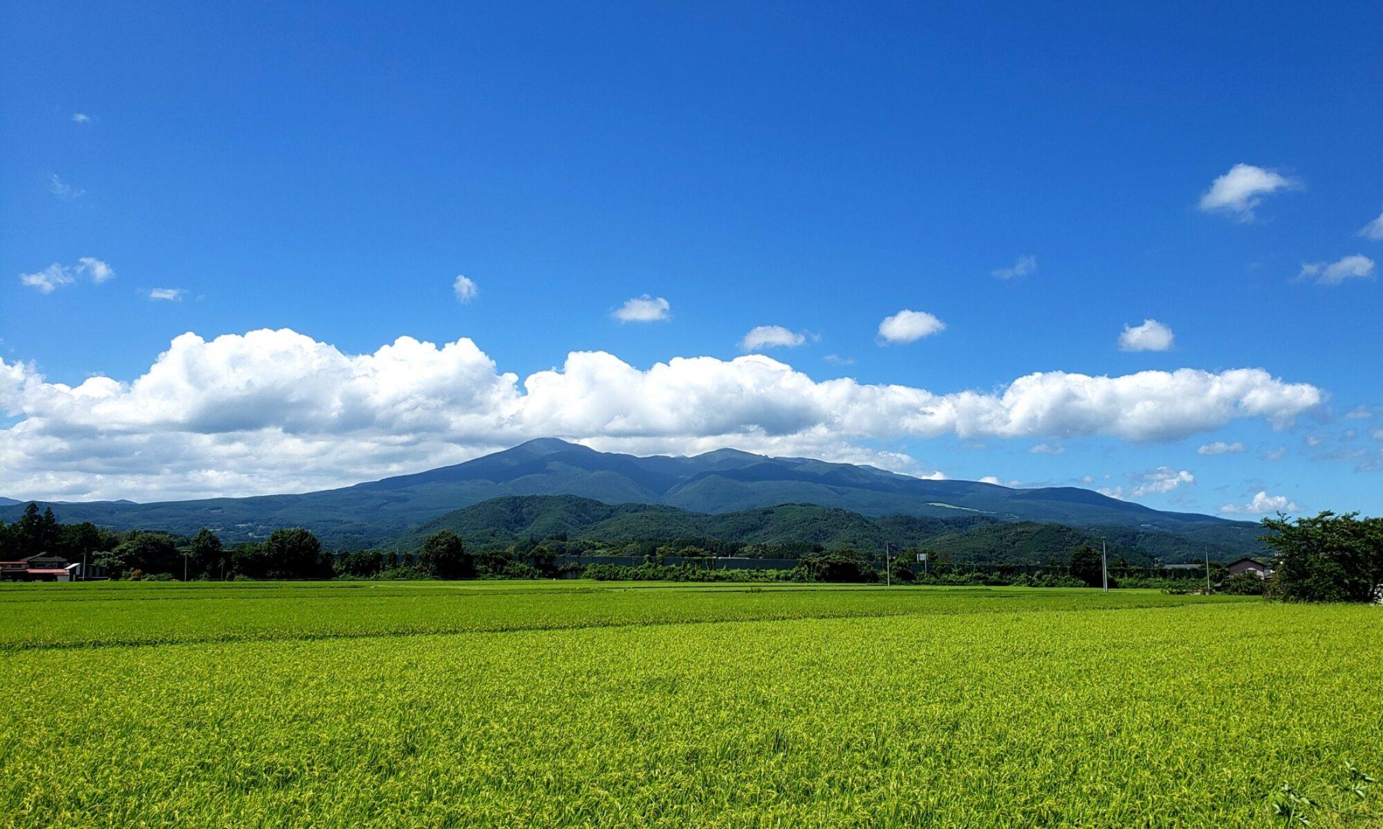 【農業PJ】イロドリ畑